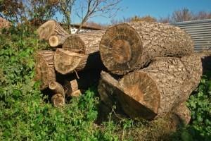 樹木伐採-300x200